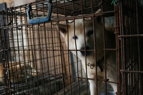 元繁殖犬「はなちゃん」のフォトブック_f0242002_22325404.jpg