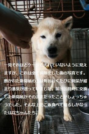 元繁殖犬「はなちゃん」のフォトブック_f0242002_22330068.jpg