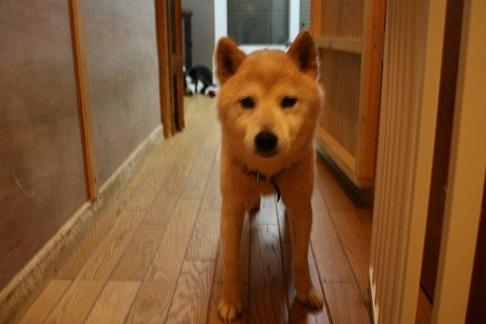 元繁殖犬「はなちゃん」のフォトブック_f0242002_22330722.jpg