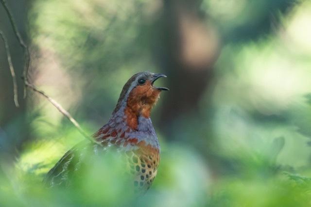 5/24 あまりパッとしない鳥見_a0080832_23101447.jpg