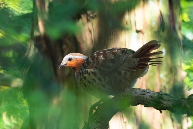 5/24 あまりパッとしない鳥見_a0080832_23102055.jpg