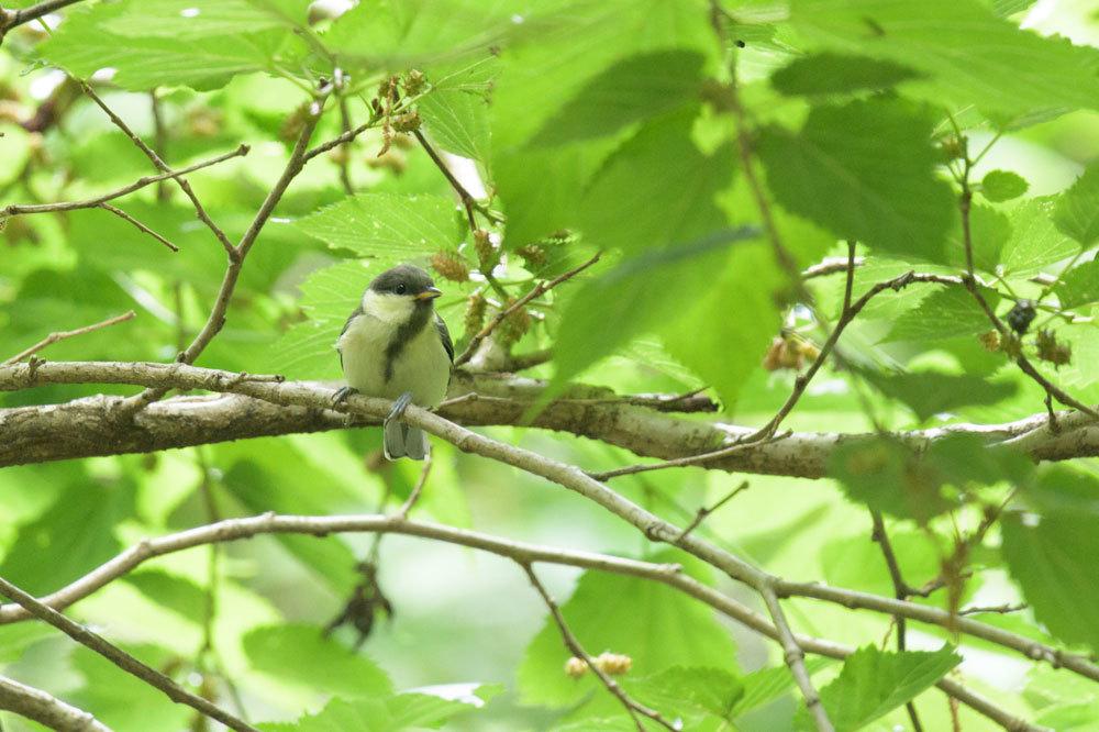 幼鳥_b0036743_17584873.jpg
