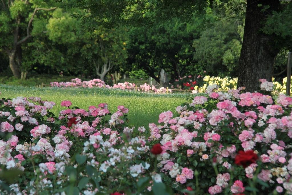 バラ公園の散歩_a0355356_06521739.jpg