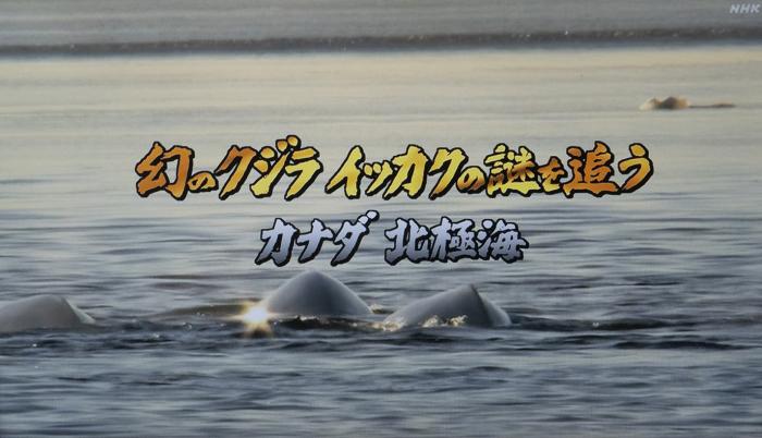 幻のクジラ・イッカク_f0103459_10092515.jpg