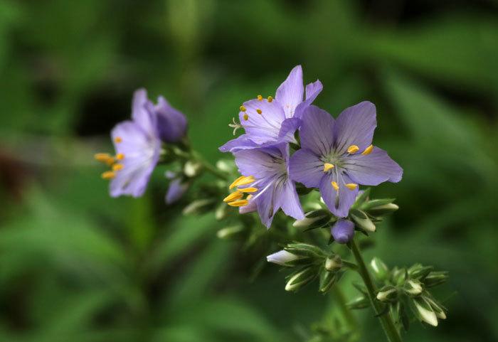 庭の花_e0128863_17394503.jpg