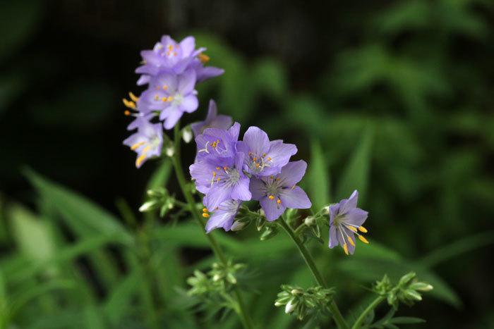 庭の花_e0128863_17401409.jpg