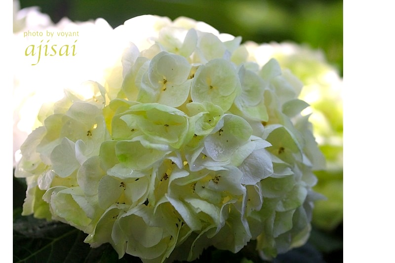 5月の庭_d0316986_7414497.jpg