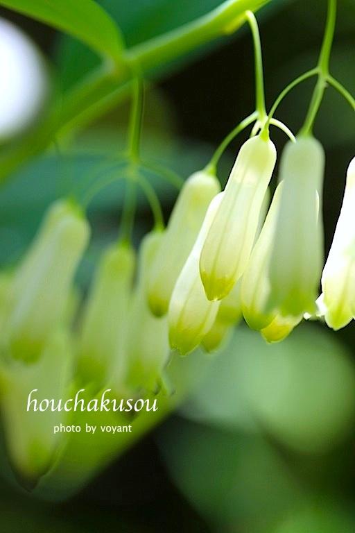 5月の庭_d0316986_7422097.jpg
