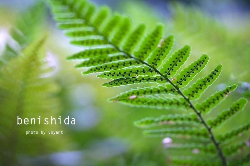 5月の庭_d0316986_742476.jpg