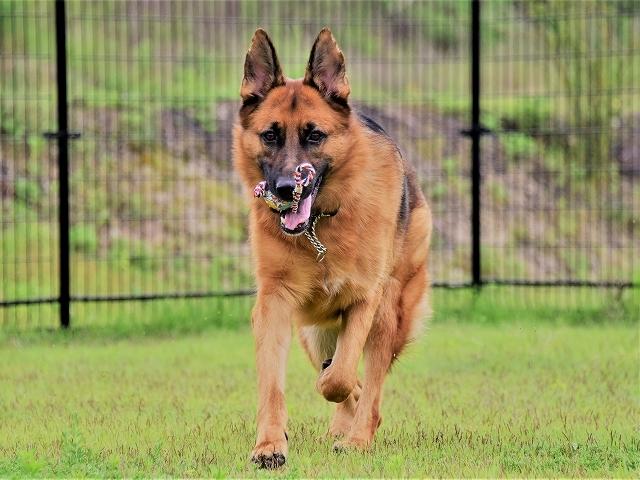 大型犬だから許されない_d0360206_20412152.jpg