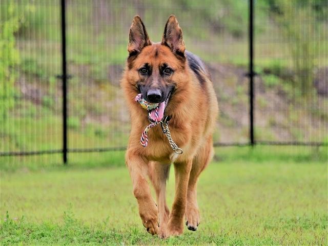 大型犬だから許されない_d0360206_20412562.jpg