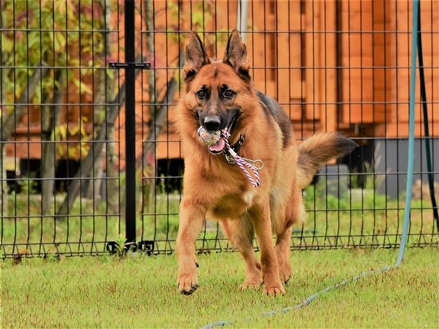 大型犬だから許されない_d0360206_20414882.jpg
