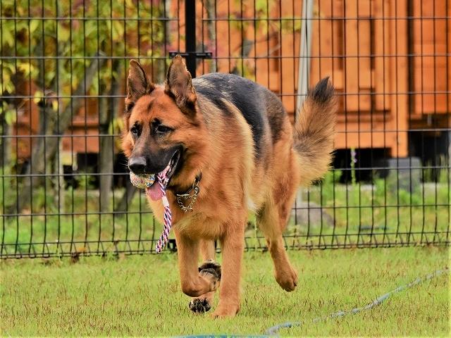 大型犬だから許されない_d0360206_20415267.jpg