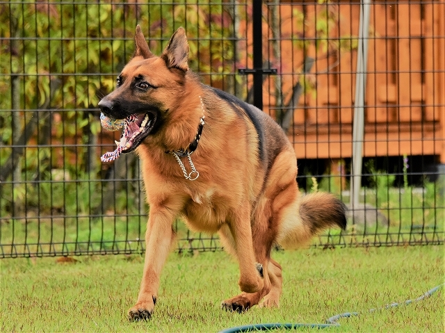 大型犬だから許されない_d0360206_20415858.jpg