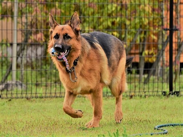 大型犬だから許されない_d0360206_20420250.jpg