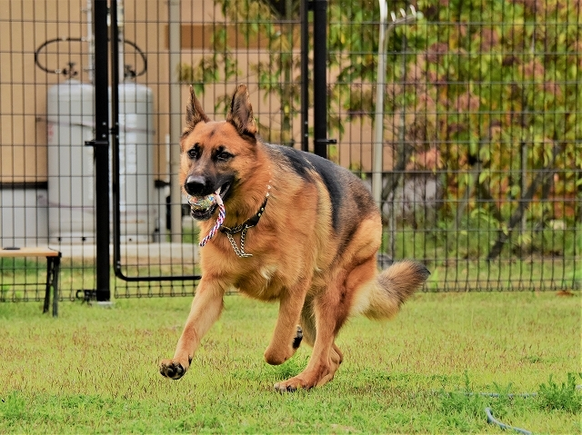 大型犬だから許されない_d0360206_20420573.jpg