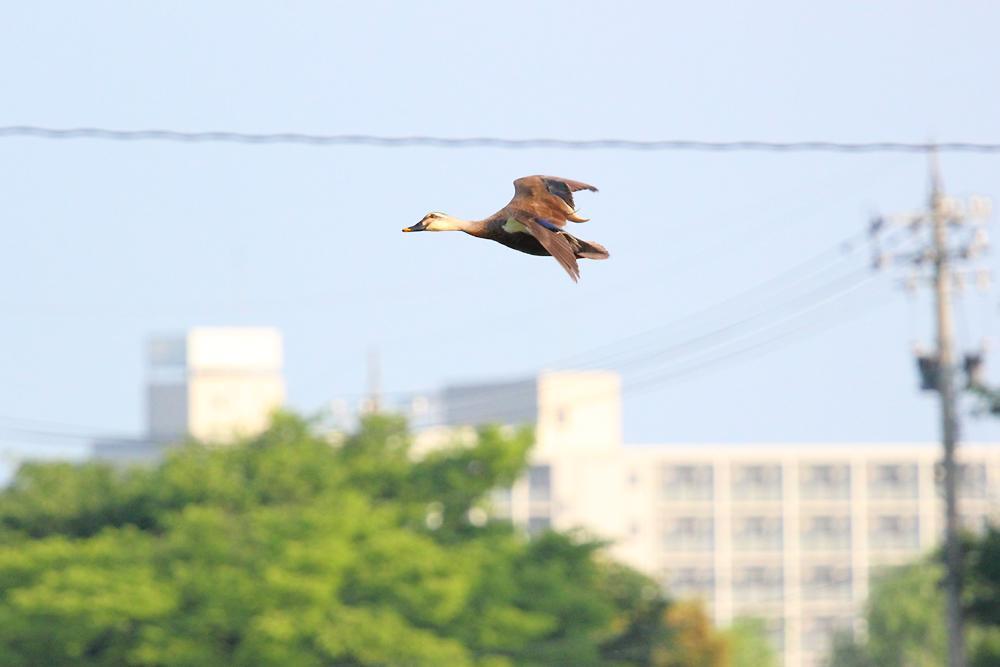 飛ぶ鳥_e0403850_20333763.jpg