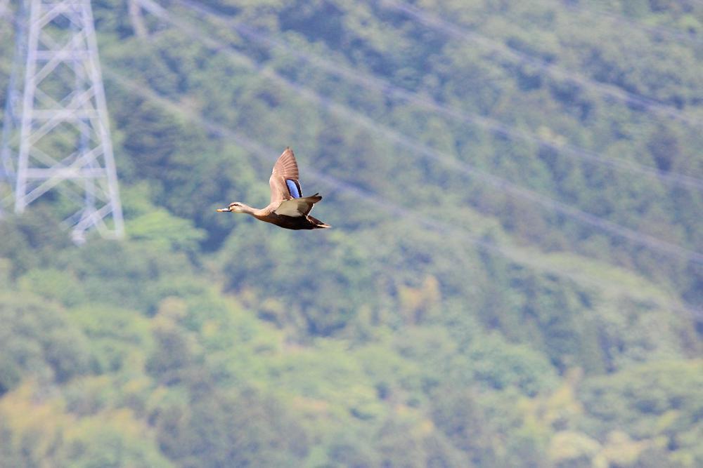 飛ぶ鳥_e0403850_20335191.jpg