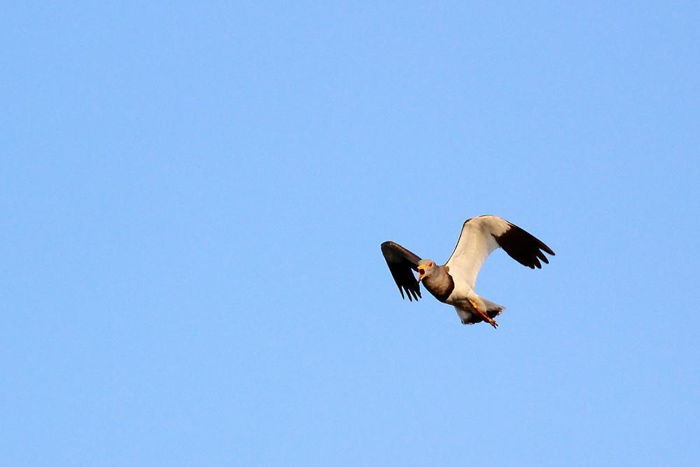 飛ぶ鳥_e0403850_20344028.jpg