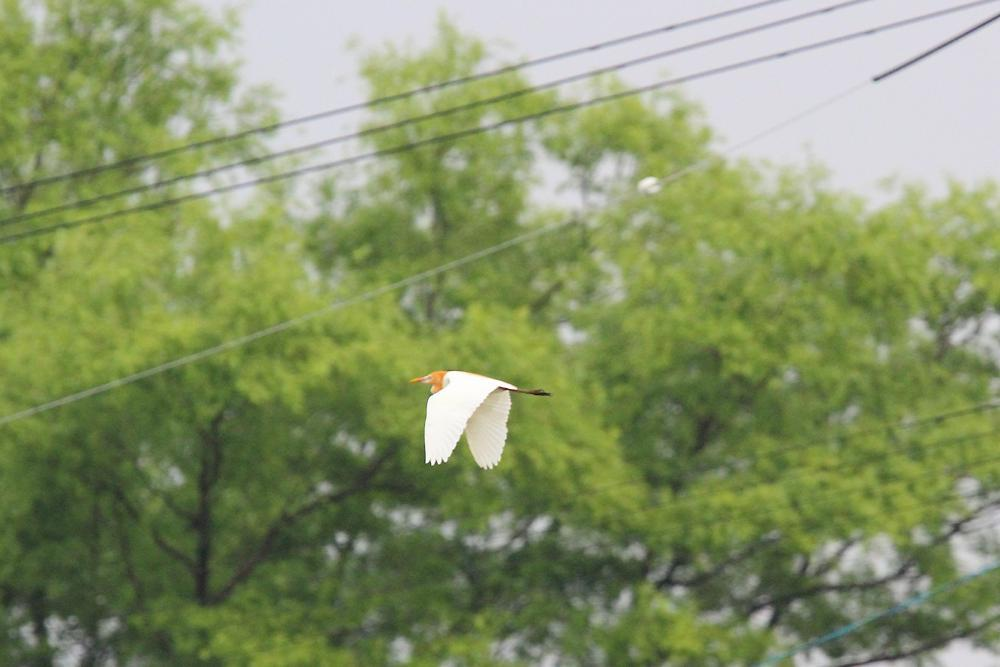 飛ぶ鳥_e0403850_20344709.jpg