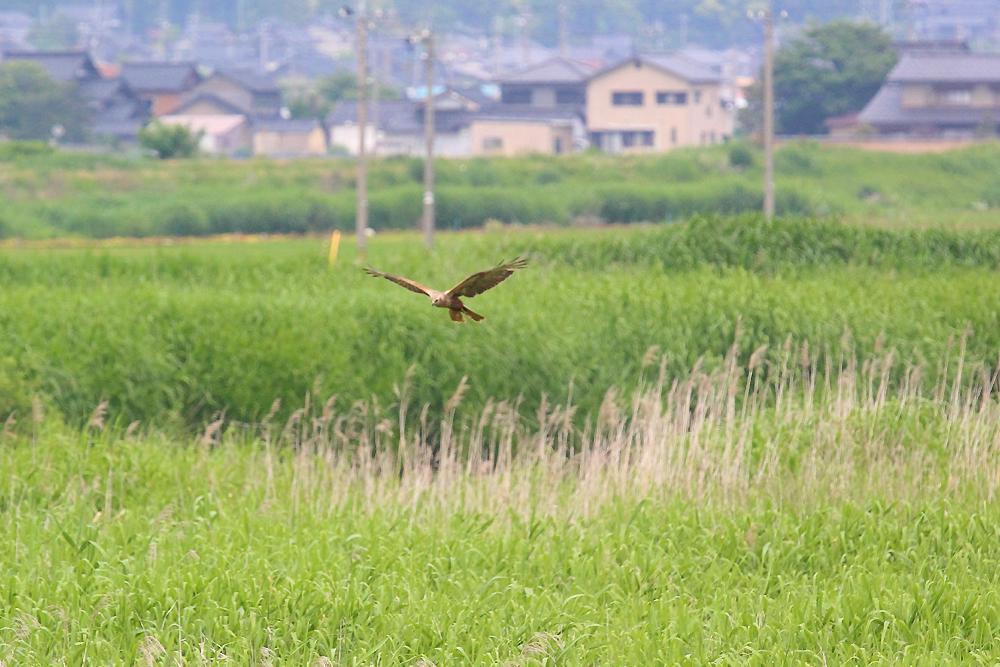 飛ぶ鳥_e0403850_20345780.jpg