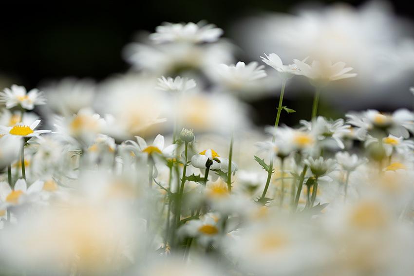 白い花2_f0234453_13392542.jpg