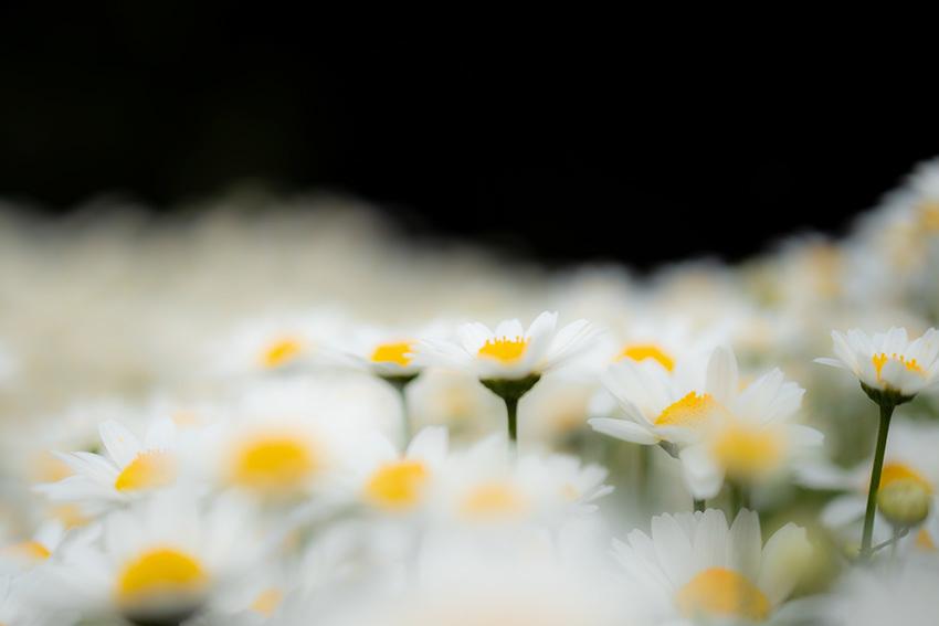 白い花2_f0234453_13393174.jpg