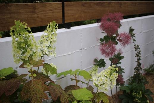 初夏の庭花とパイナップル_d0291758_22361449.jpg