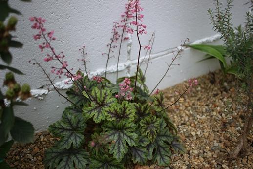 初夏の庭花とパイナップル_d0291758_22375893.jpg
