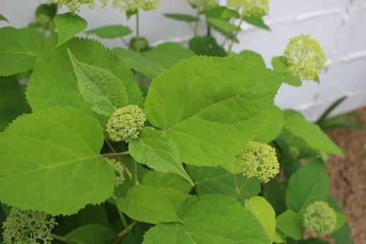 初夏の庭花とパイナップル_d0291758_224044100.jpg