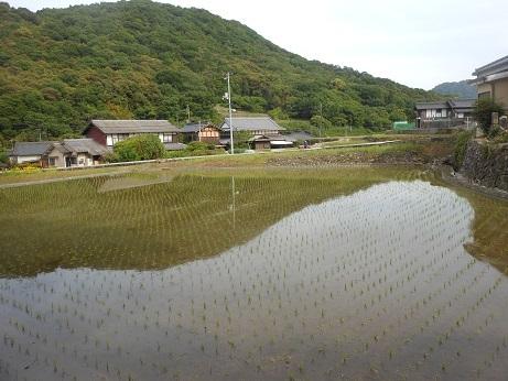 水田の水鏡は田植えの準備_e0175370_19403853.jpg