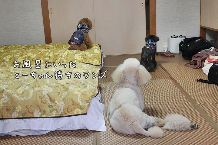 またまたホテル旬香さん。【誕生日旅行6】_b0111376_15272216.jpg