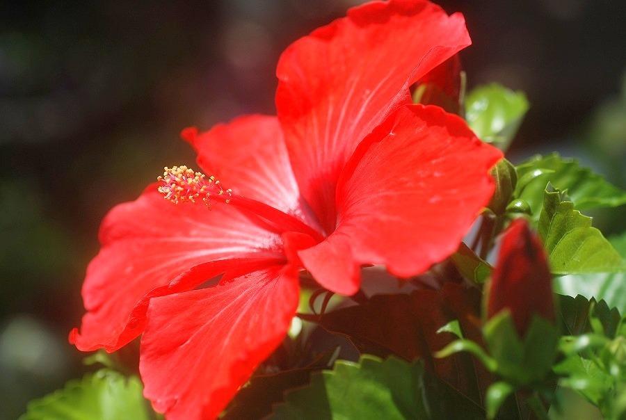 五月の庭の花々_c0187781_23213930.jpg
