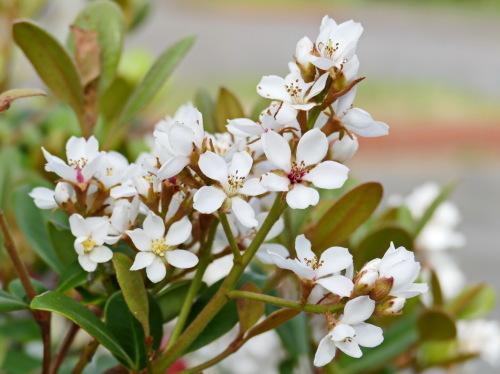 富浜緑地の花の紹介R2.5.15_d0338682_10320230.jpg