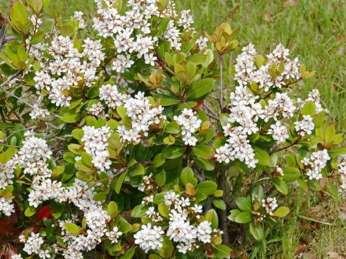 富浜緑地の花の紹介R2.5.15_d0338682_10341688.jpg