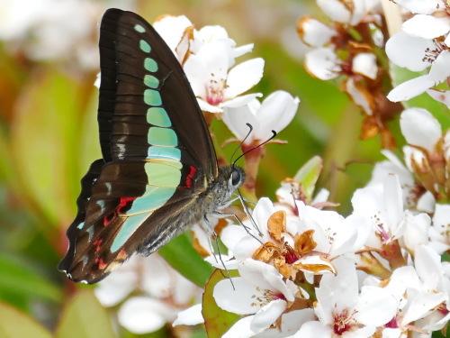 富浜緑地の花の紹介R2.5.15_d0338682_10351967.jpg