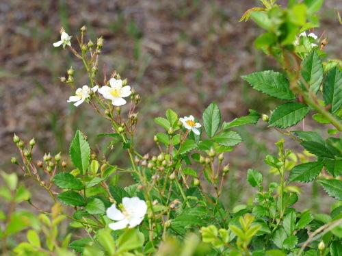 富浜緑地の花の紹介_d0338682_10365613.jpg