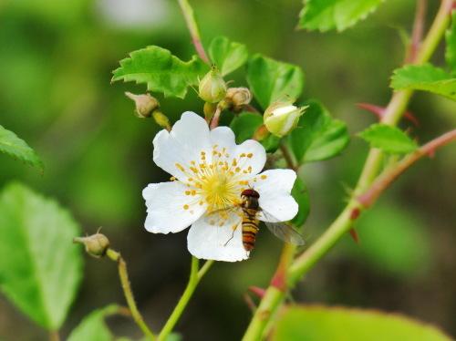 富浜緑地の花の紹介R2.5.15_d0338682_10400465.jpg