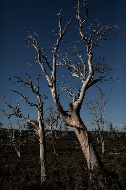 タスマニアの自然模様 9_c0248100_17144342.jpg