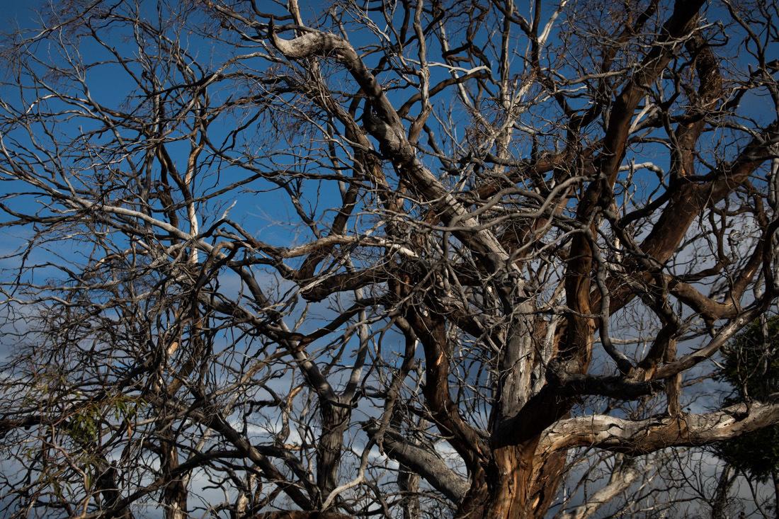 タスマニアの自然模様 9_c0248100_17144511.jpg