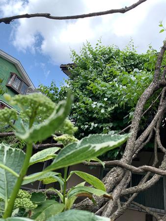 5月の庭 2020 - 1_f0239100_22432355.jpg