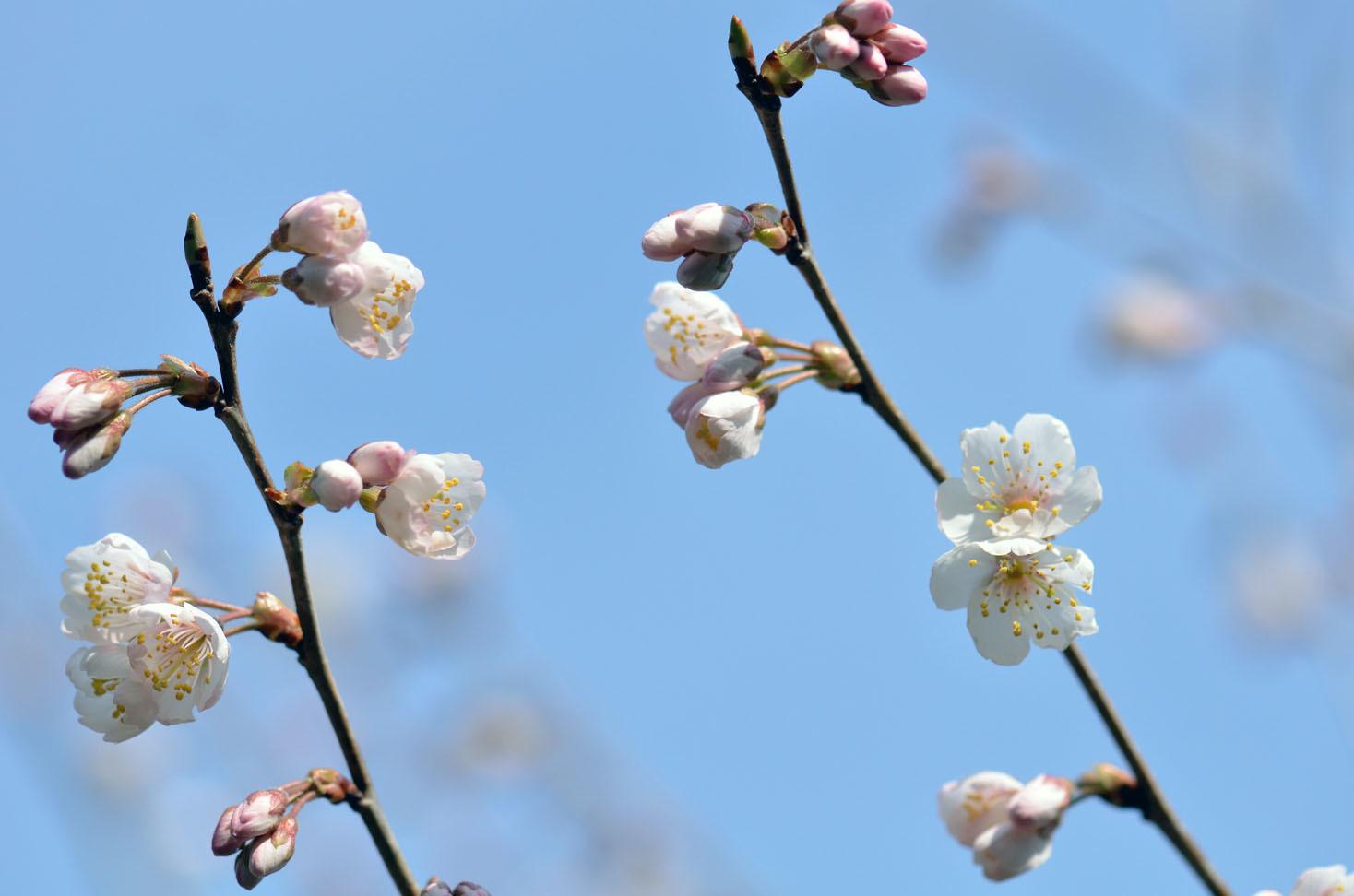 それでも春が_d0085413_16412252.jpg