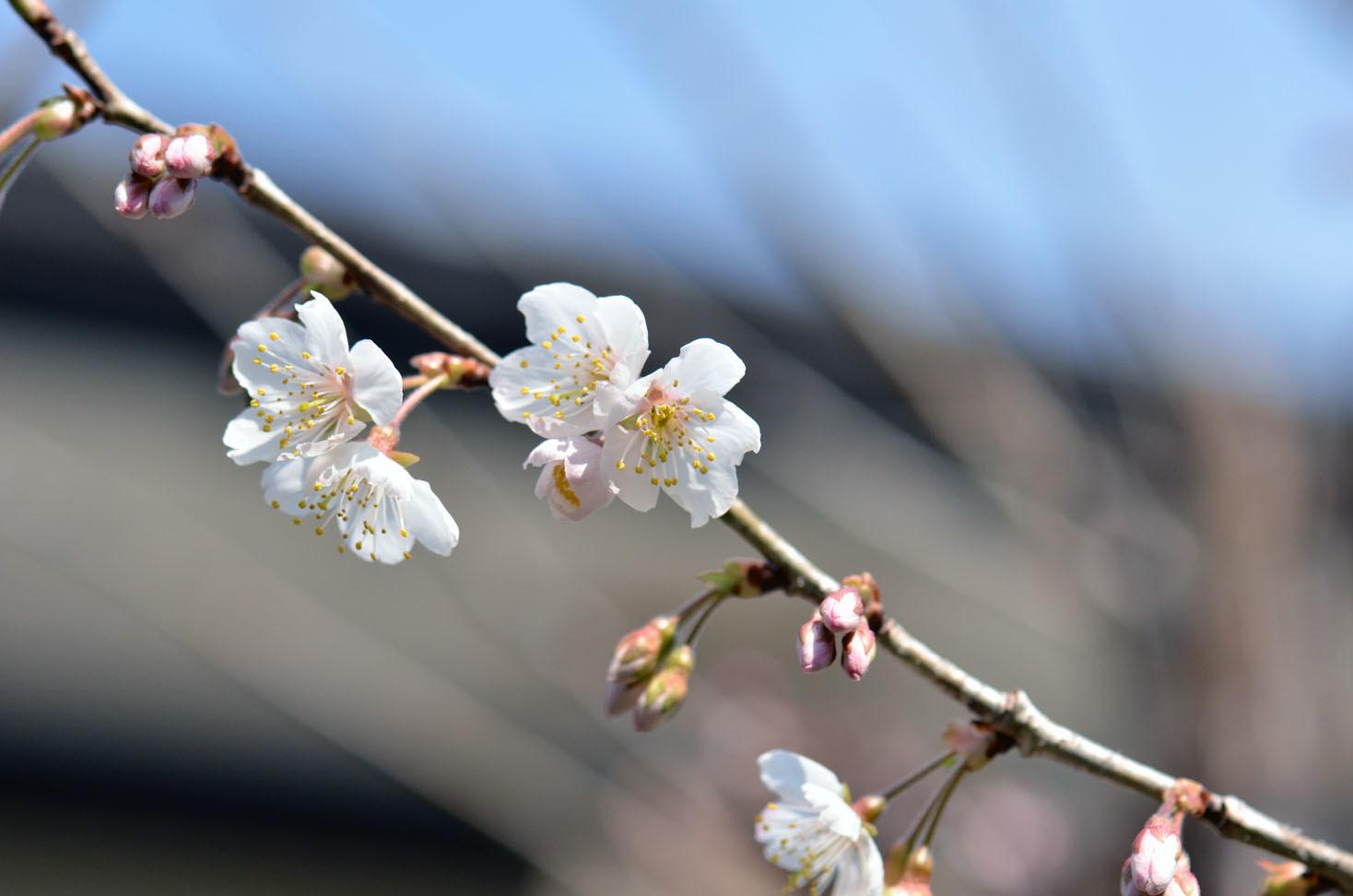 それでも春が_d0085413_16453289.jpg