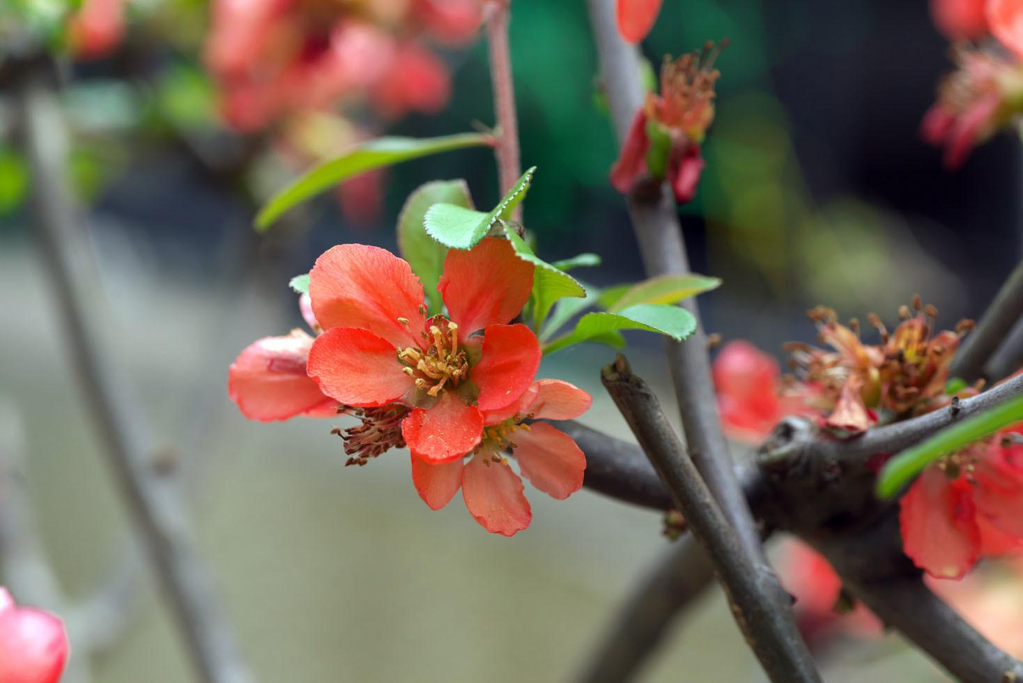 庭の花_d0085413_16555977.jpg