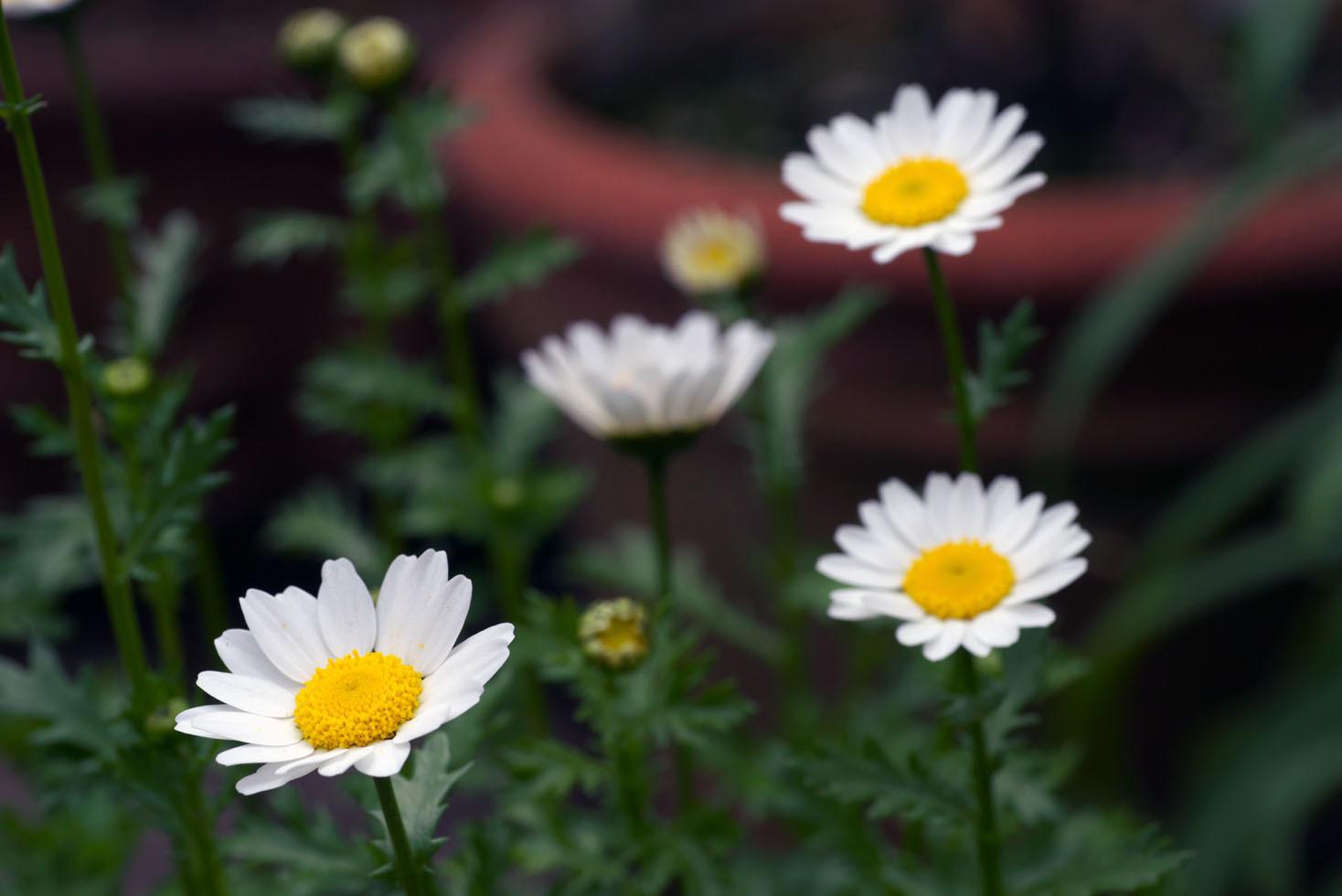 庭の花_d0085413_16562063.jpg