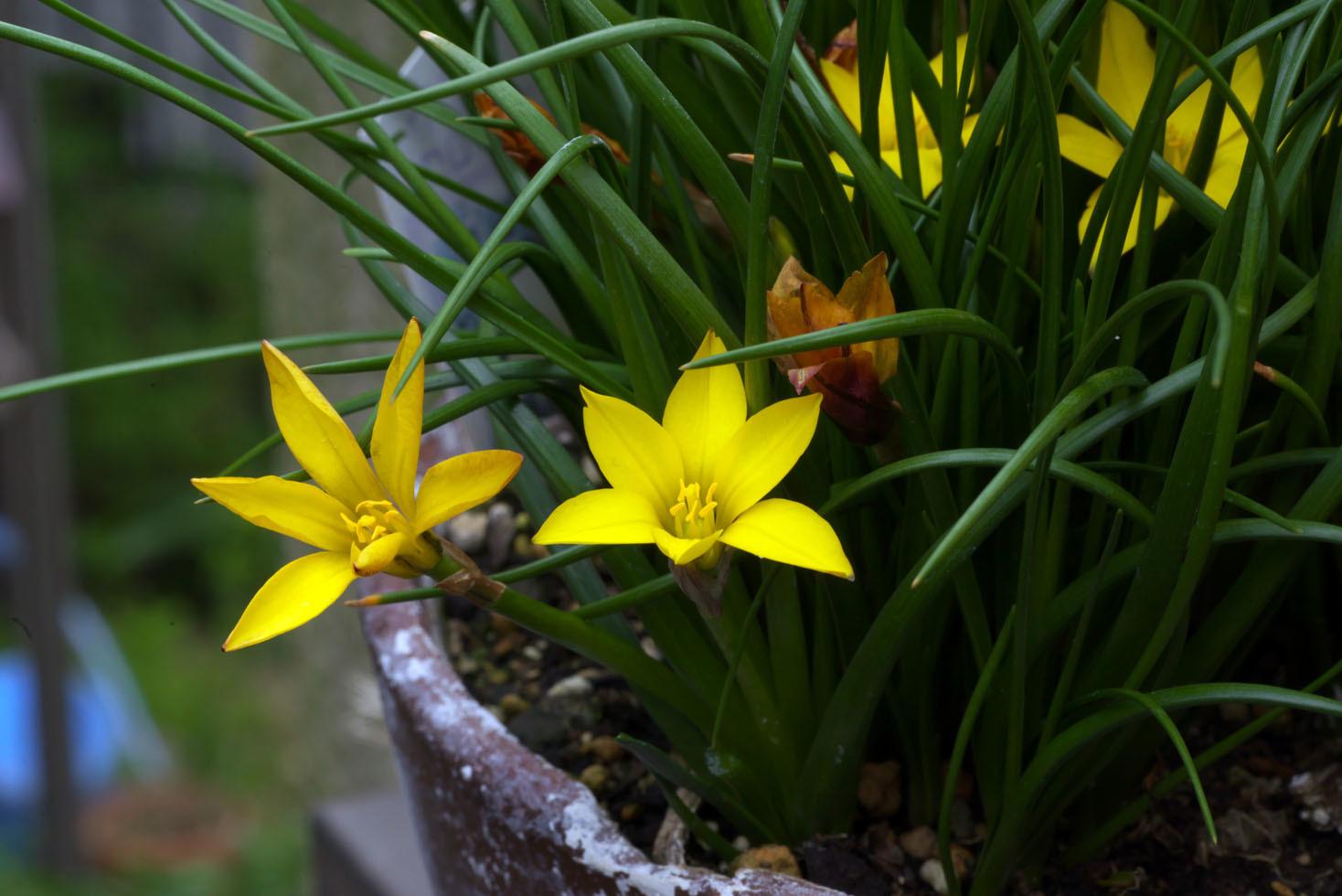 庭の花_d0085413_16562987.jpg