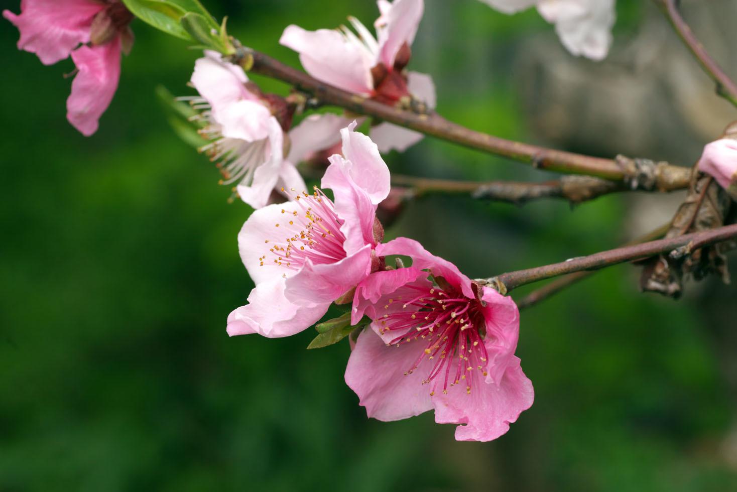 庭の花_d0085413_16571390.jpg