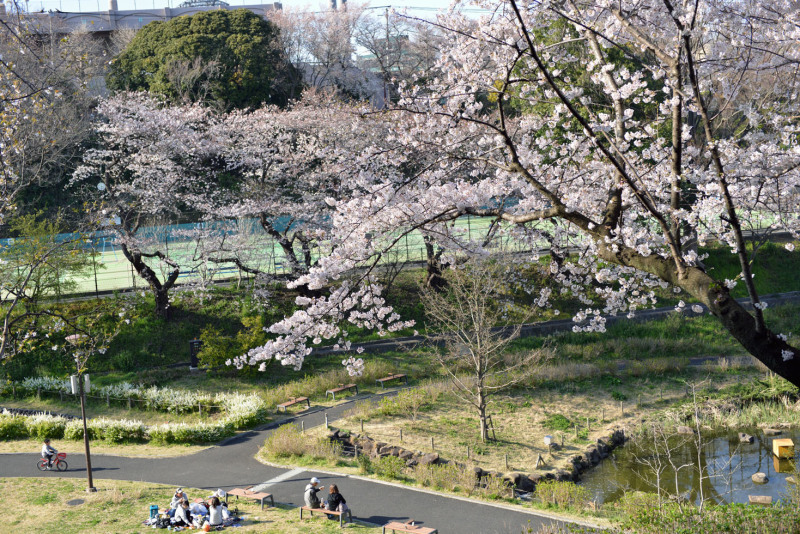 保土ヶ谷公園の桜_d0085413_17040995.jpg