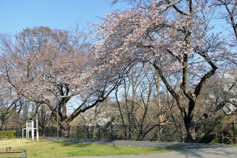保土ヶ谷公園の桜_d0085413_17041159.jpg