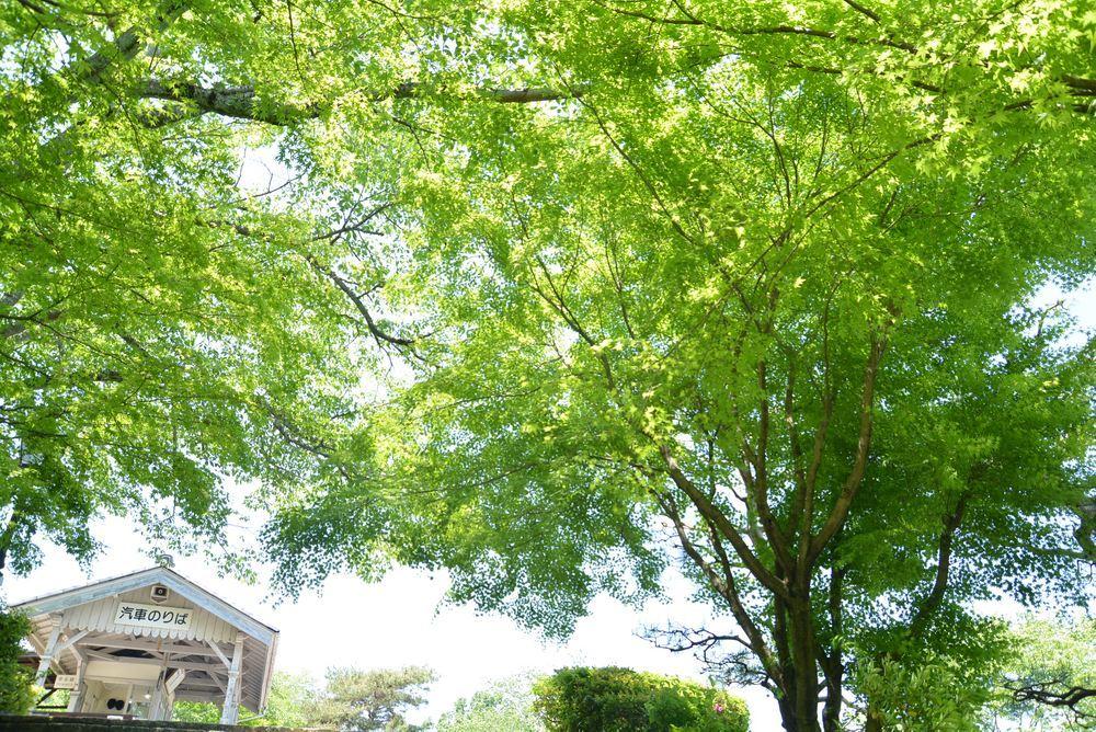 京都市電名古屋電停の新緑_e0373930_20450038.jpg